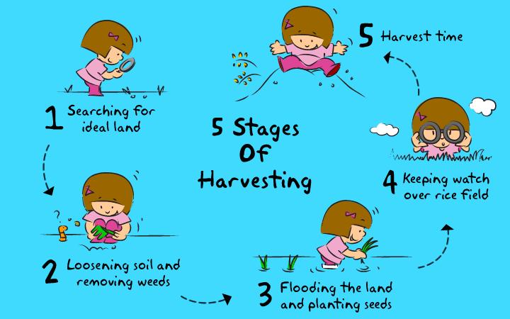 harvesting-chart