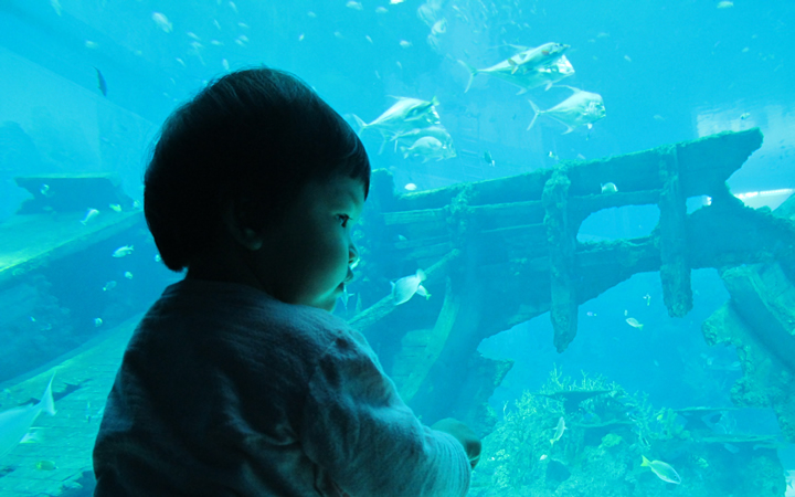 sea-aquarium-02