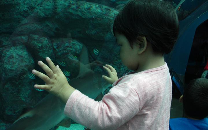 sea-aquarium-05